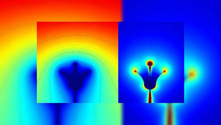 Электрическое поле вокруг цветка (справа) и картина распределения напряжения вокруг него (слева) помогают насекомому определить, где он найдёт больше сладкого нектара