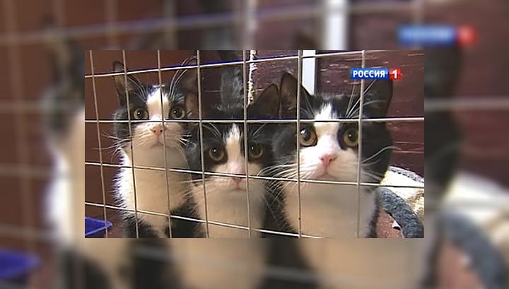 """Кошки """"Лесного приюта"""" готовы к переезду"""