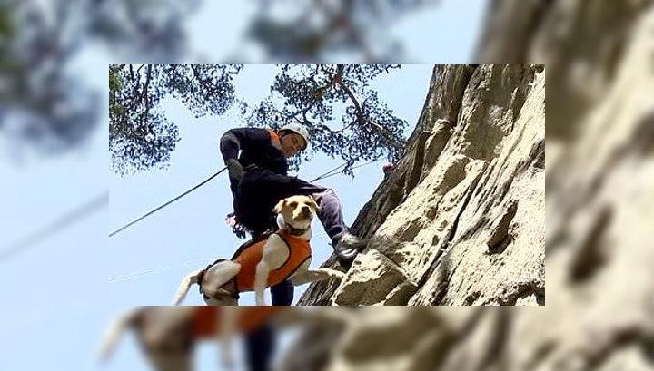 Спасатели обучают собак профессии альпиниста