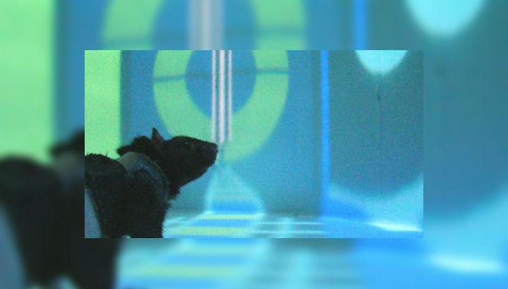Эксперимент показал, что в виртуальном пространстве задействуется в два раза меньше нейронов места