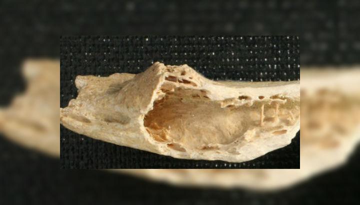 Размеры косточки неандертальца были очень небольшими — всего 30 миллиметров в длину