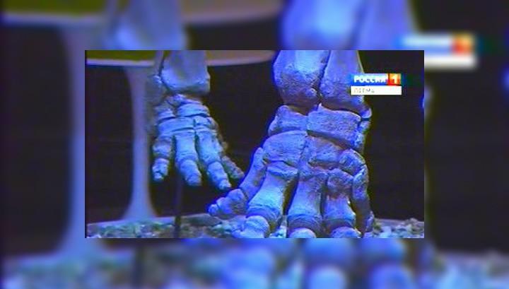 В Пермском крае нашли кости дедушки мамонта