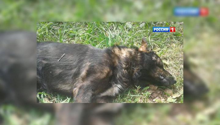 Пса убили на глазах у детей: догхантеров нанял сельсовет