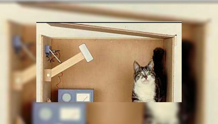 Парадокс кота Шрёдингера известен каждому, но не каждый понимает, что он на самом деле описывает