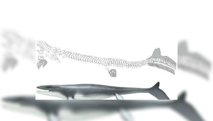 Останки скелета мозазавра были обнаружены в центральной Иордании