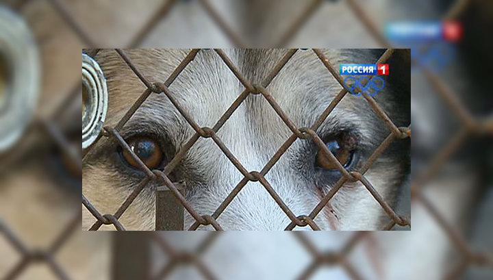 """Собаки из приюта """"Ника"""" ждут хозяев и волонтеров"""