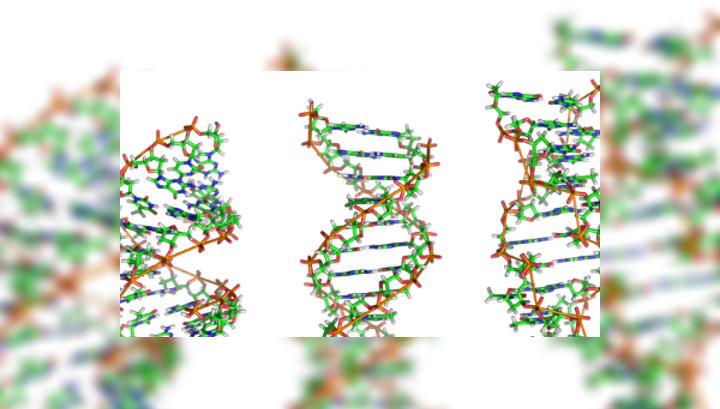 Мутации в геноме возникают как компенсационный ответ на удаление какого-либо одного гена