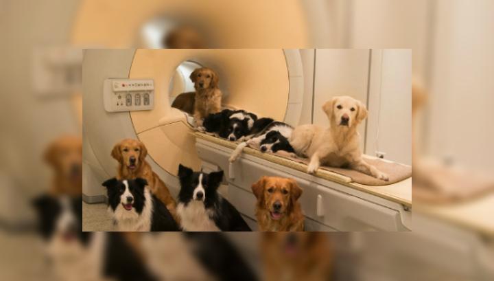 Собаки из исследовательского центра в Будапеште