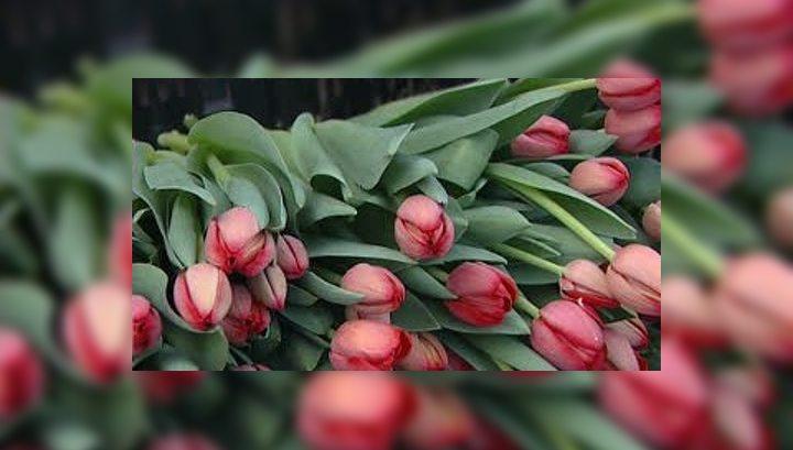 В Красноярск привезли миллион голландских тюльпанов