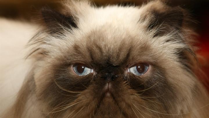В Швейцарии 3% населения ест кошек и собак