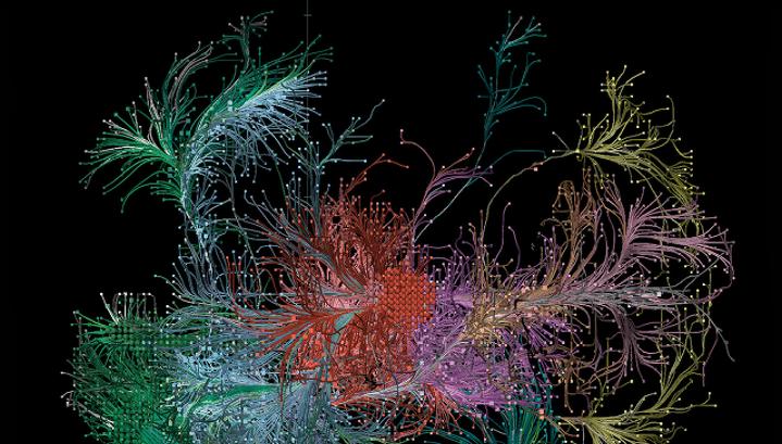 Нейроны головного мозга мыши