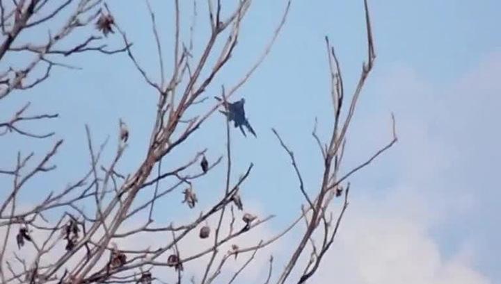 Очевидцы: в Краматорске подбит истребитель