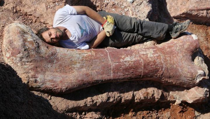 Картинки по запросу Останки динозавров