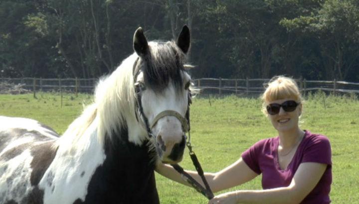 движениями лошадей с картинки