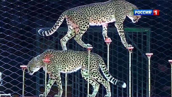 Цирк Запашных привез китайцам экзотическое шоу