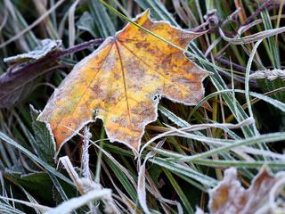 В первые дни ноября заметно похолодает: прогноз на выходные