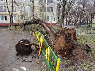 На мальчика упало дерево, он в крайне тяжелом состоянии