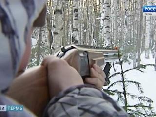 Прикамские браконьеры, подстрелившие шесть лосей, пойдут под суд