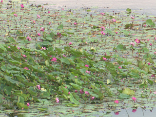Туристы уничтожают уникальный пруд под Воронежем. Вести