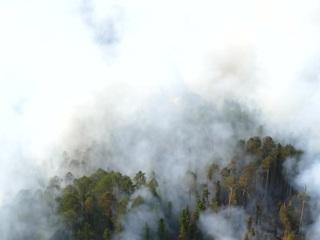 """Лесные пожары: на помощь Авиалесоохране направлено подкрепление из федерального резерва. Новости на """"России 24"""""""