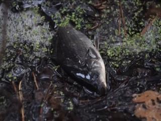 """В нацпарке """"Шушенский бор"""" рыба оказалась на берегу из-за ливней"""