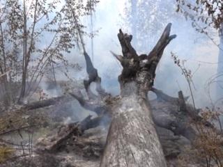 Сибирские леса горят