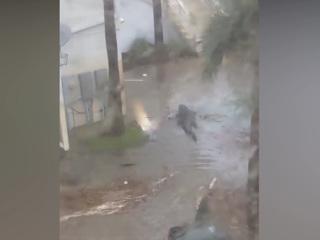 Трехметровый аллигатор заплыл во двор частного дома в США