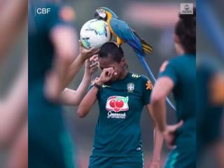 Огромный попугай прервал тренировку сборной Бразилии, сев на голову футболистке