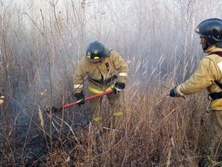 """Новости на """"России 24"""". Большинство лесных пожаров приходится на Тюменскую область"""