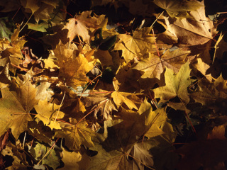 Золотая осень придет на этой неделе