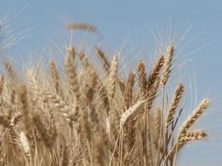 Урожай под угрозой: цены на удобрения взлетели до небес
