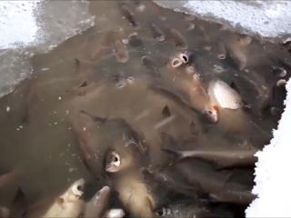 Рыбоохрана Югры не нашла связь между мором рыбы и пожаром на трубопроводе