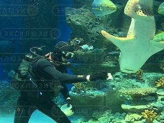 Видео из Сети. В честь Масленицы новосибирских акул накормили блинами