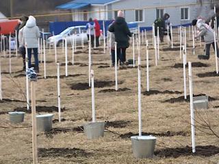 Вести. Более тысячи деревьев высадили в Белгородской области в память о погибших на войне