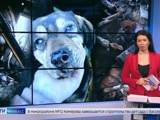 В Кемерове в приюте для бездомных собак произошел пожар