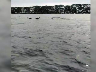 Видео из Сети. Наперегонки с дельфинами: мурманский рыбак выложил забавное видео