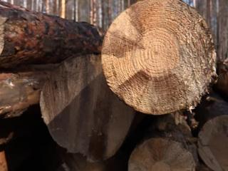 Вести. Дежурная часть. Инспекторы проверят, почему в иркутском лесничестве редеет лес