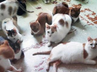 Москвичке в наследство от бабушки достались 70 кошек