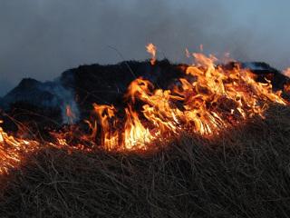 Новости на России 24. В России тушат 45 лесных пожаров