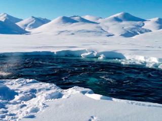 Новости на России 24. Два десятка белух остаются в ледовой ловушке в национальном парке Берингия
