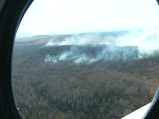 Площадь лесных пожаров в России сократилась до 4,5 тысячи гектаров