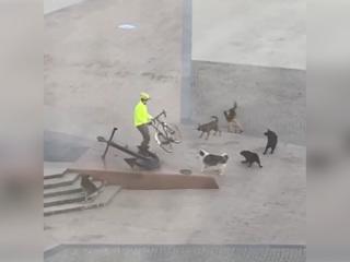Астраханец отбился велосипедом от стаи собак. Видео