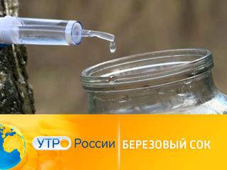 Утро России. Березовый сок