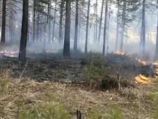 Новости на России 24. Лесной пожар в Челябинской области: огонь подошел к жилым поселкам