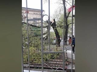 Два человека попали в больницы из-за ураганного ветра в Москве
