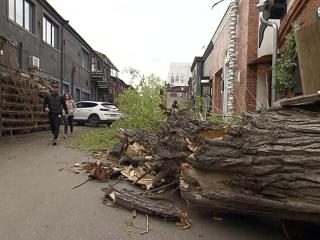 Москвичам посоветовали избегать деревьев в связи с грозой