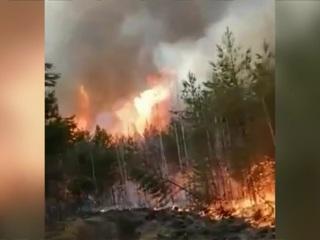 Новости на России 24. Жители регионов приходят на помощь в тушении лесных пожаров