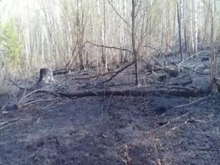 Во время лесного пожара в Красноярском крае задохнулся медвежонок