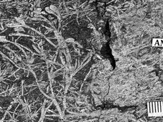 В Африке обнаружены 15 древнейших ископаемых растений