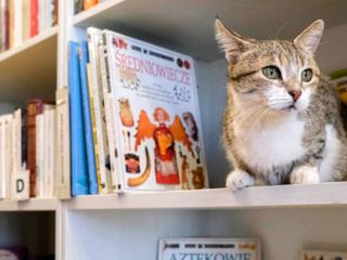 Лучшей служебной кошкой России стала Муся из Петербурга